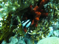 Best of the Red Sea 2010_01.jpg