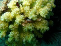Best of the Red Sea 2010_09.jpg