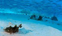 Best of the Red Sea 2010_11.jpg