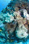 Best of the Red Sea 2010_15.jpg