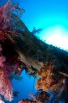 Best of the Red Sea 2010_20.jpg