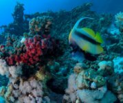 Best of the Red Sea 2010_22.jpg