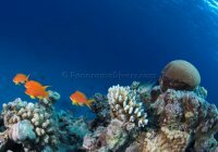 Best of the Red Sea 2010_33.jpg