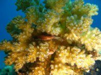 Best of the Red Sea 2010_34.jpg