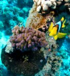Best of the Red Sea 2010_36.jpg