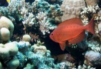Best of the Red Sea 2010_42.jpg