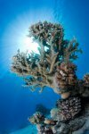 Best of the Red Sea 2010_45.jpg
