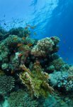 Best of the Red Sea 2010_50.jpg