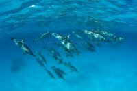 Best of the Red Sea 2010_57.jpg