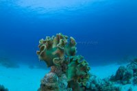 Best of the Red Sea 2010_58.jpg