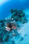 Best of the Red Sea 2010_68.jpg
