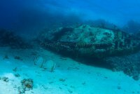 Best of the Red Sea 2010_73.jpg