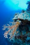 Best of the Red Sea 2010_74.jpg