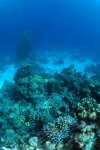 Best of the Red Sea 2010_77.jpg