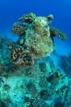Best of the Red Sea 2010_83.jpg